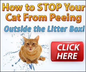 stop the cat urine smell