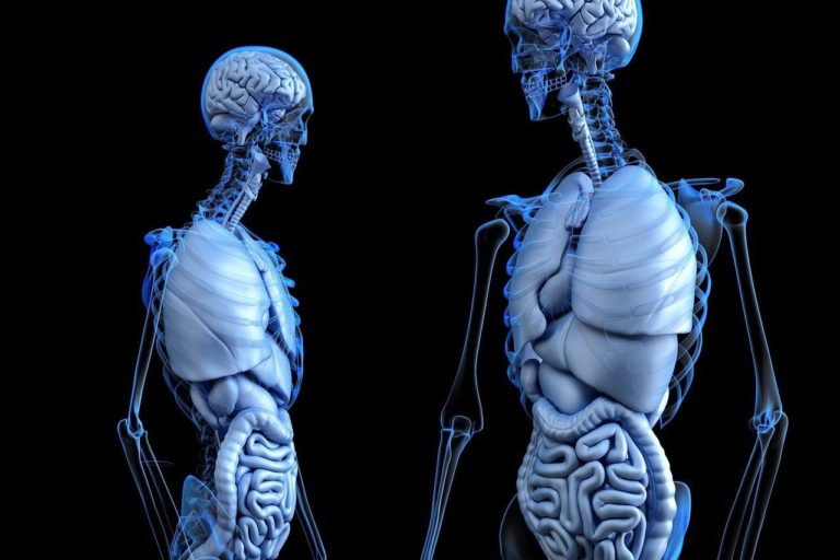 Dr. James Ross Human Anatomy and Physiology Online Course Review